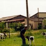 """Les veaux de la ferme """"La pouillotte"""" à Bonzée"""