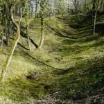 Les forêts marquées par la 1ère Guerre Mondiale en Meuse