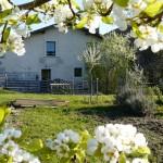 Cerisier en fleur - Gite le moulin aux champs
