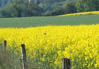 agriculture et glyphosate